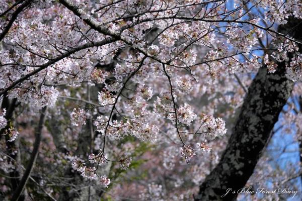 kanabukizawa21-0424-014.jpg