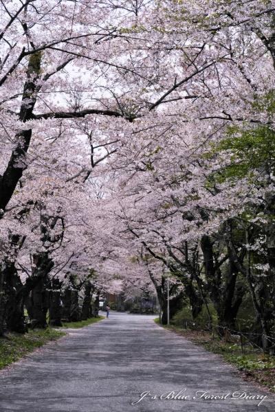kanabukizawa21-0424-027.jpg