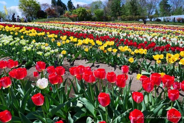 tulip21-0506-048.jpg