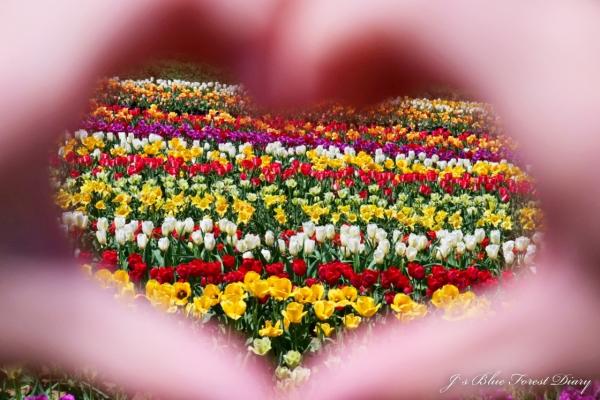 tulip21-0506-052.jpg