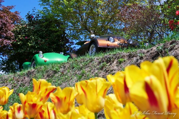 tulip21-0506-054.jpg