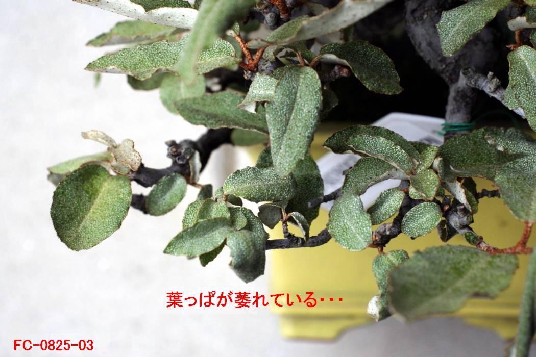 FC0825-03.jpg