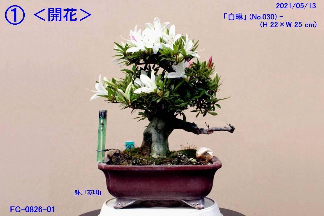FC0826-01.jpg