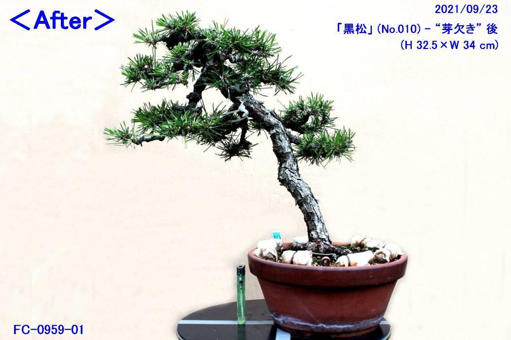 FC0959-01.jpg