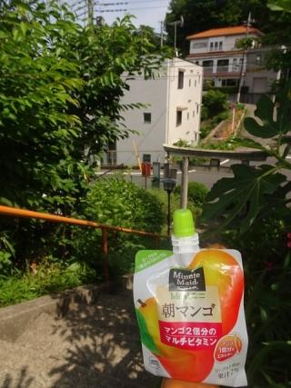 朝マンゴ (2)