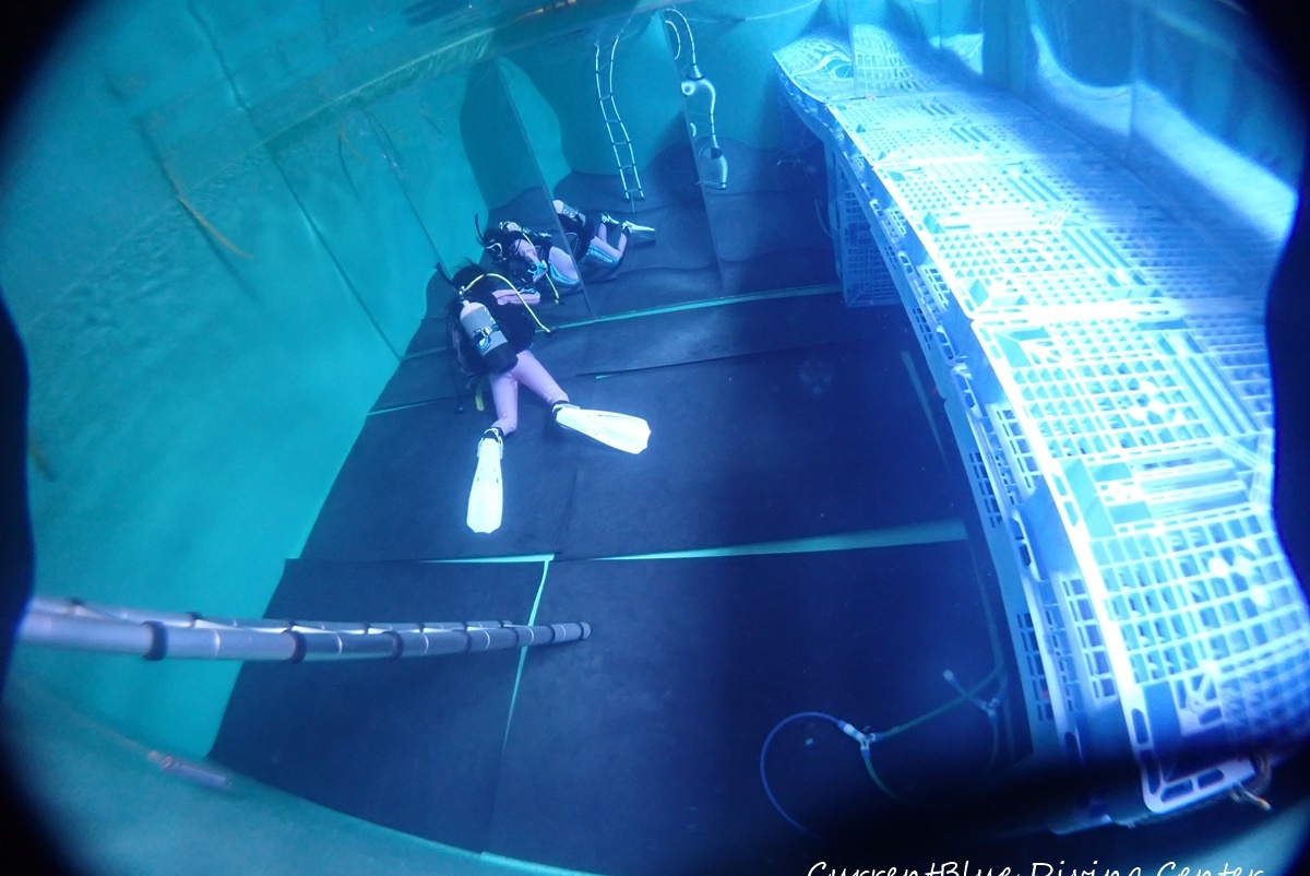プールでダイビング特訓千葉印西白井 (7)