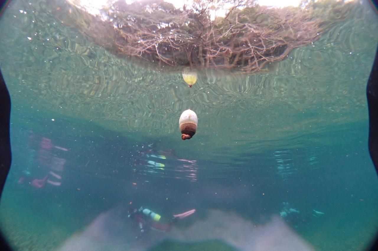 長良川ダイビングどんぐり