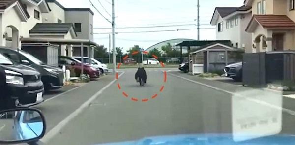 20210620テレビ局が車で熊を追いかけ自衛隊駐屯地に追い込む!「おー行った」と歓声!UHB(道新・フジ系)