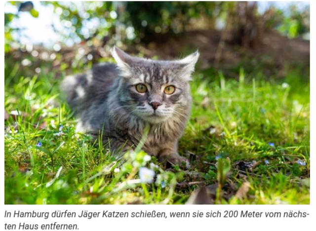ハンブルク 猫 狩猟 20210724