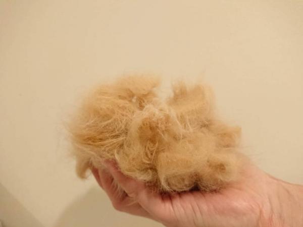 cat_hairs