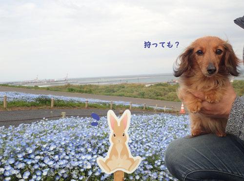 hitachikaihin34.jpg