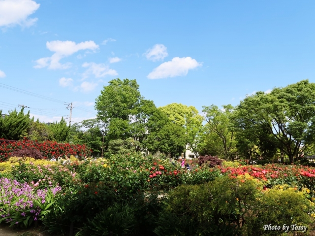 小さなバラ園