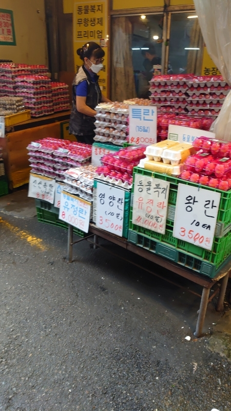 kuroichiba017.jpg