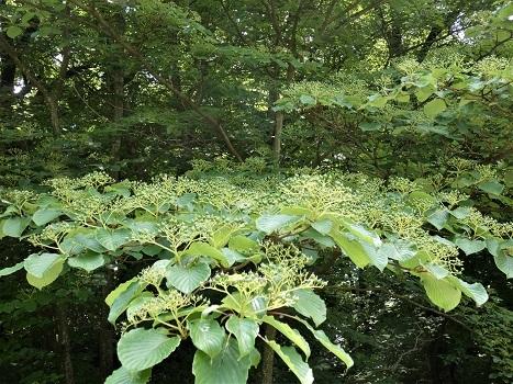 きれぎれの風彩 北本自然観察公園0523_210609-06