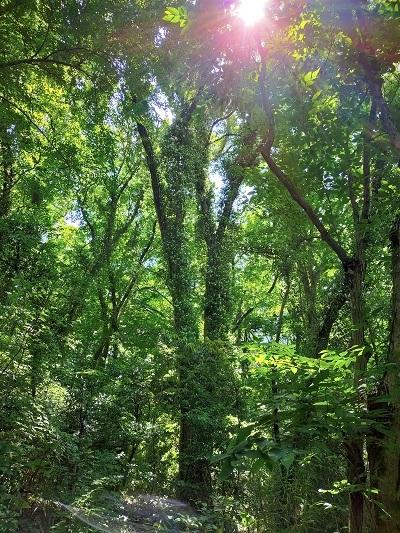 きれぎれの風彩 北本自然観察公園0523_210616-01