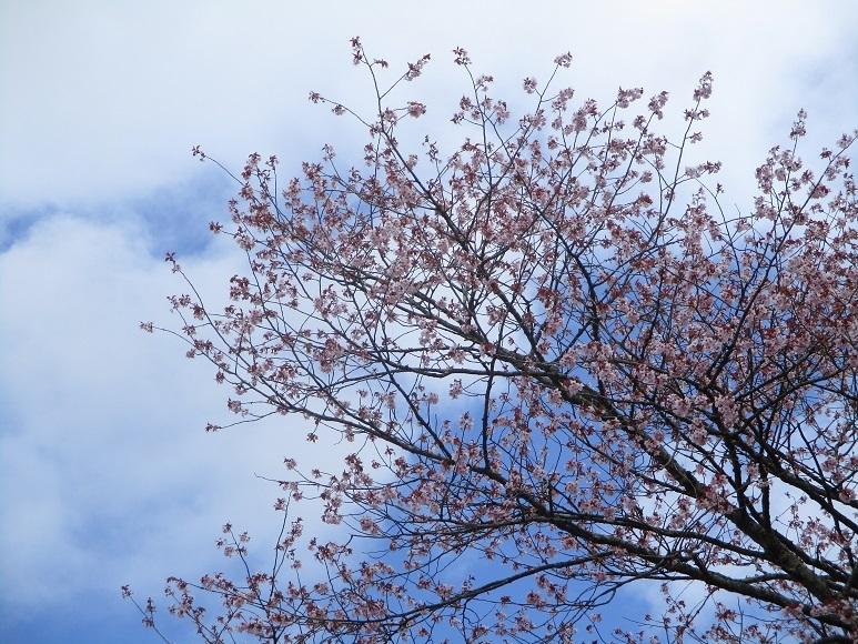 桜210503③
