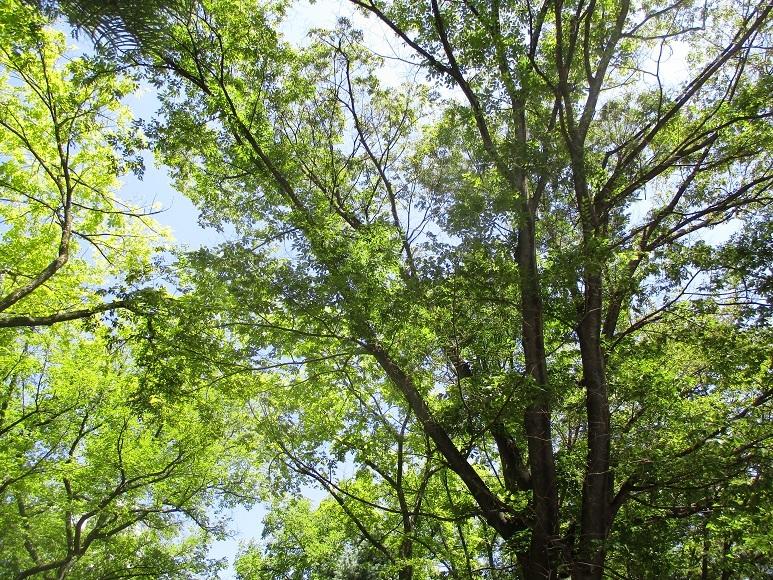 樹木初夏210719⑤
