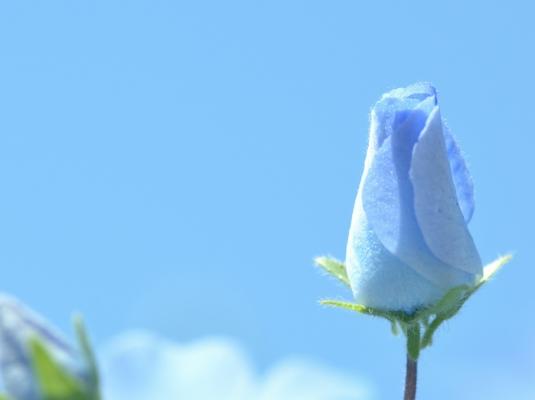 2021-4-21花の国 23