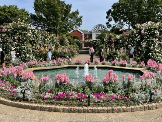 2021-5-14イングリッシュローズの庭 21