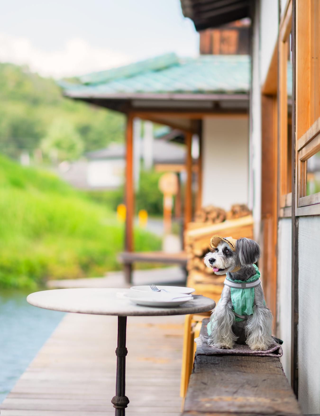 水辺のカフェ3