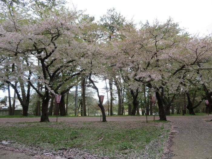 もう葉桜気味