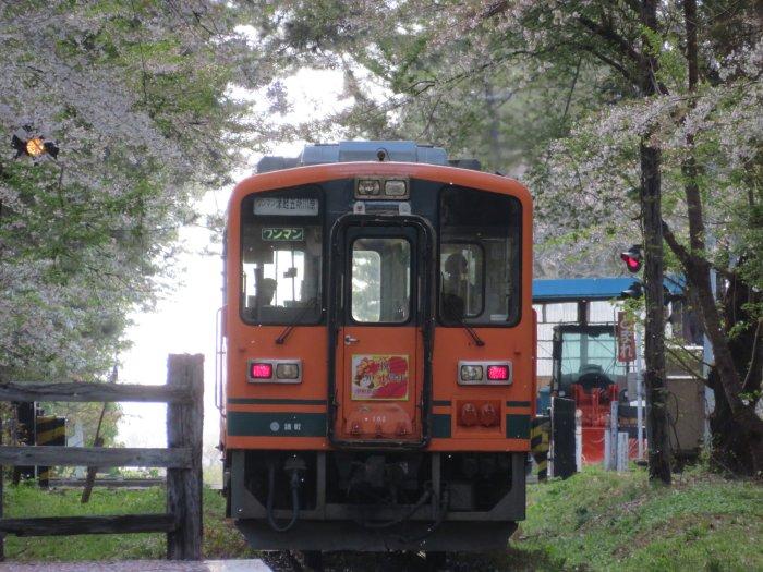 木々を行く電車