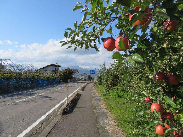 リンゴの映える季節