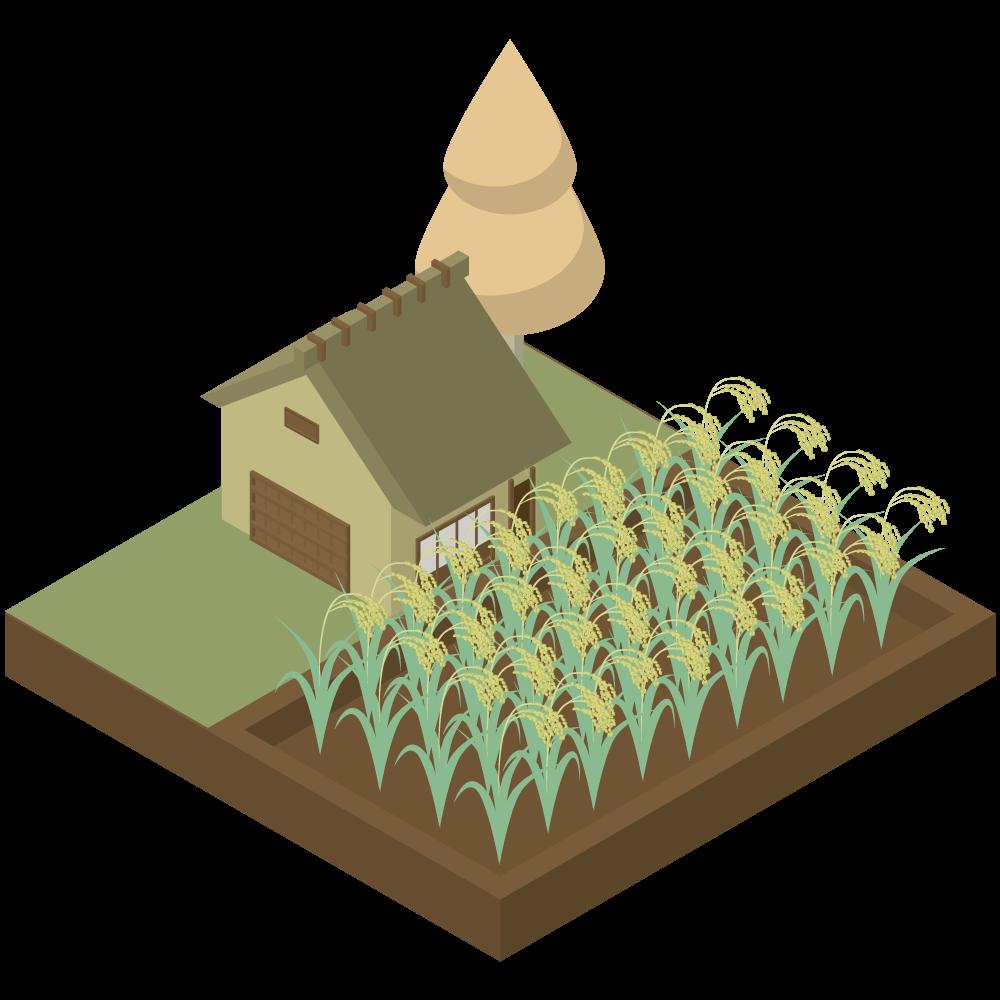 シンプルでかわいいアイソメトリックの農家と稲の田んぼの素材