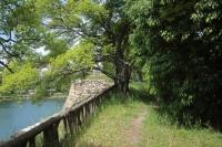 BL210513大阪城3IMG_4516