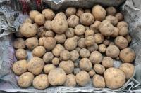 BL210530ニンニク馬鈴薯2IMG_4932