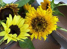 202184ffw_blogひまわり暑中見舞い 花