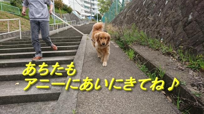 美保が丘階段