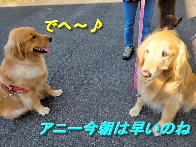 064小鞠ちゃんとアニー