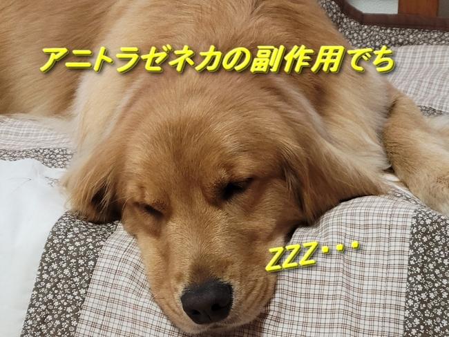 027アニー眠り