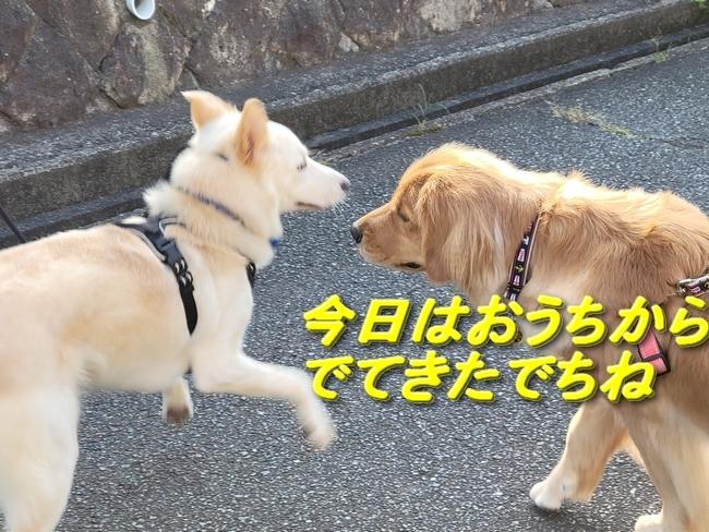 070アニハセヨ