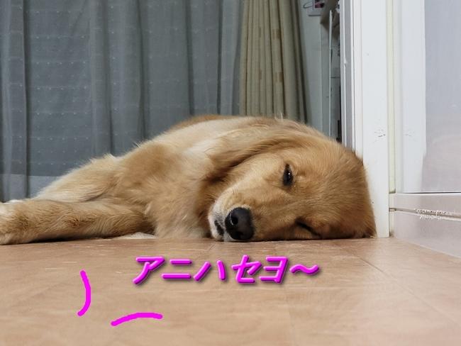006アニー1横寝