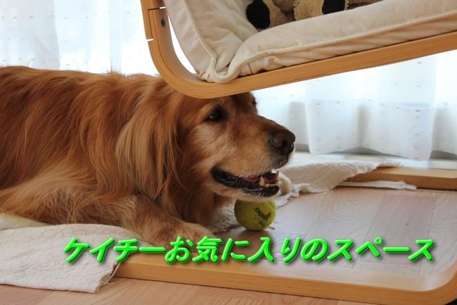 IMG_8396ケイチー椅子の下