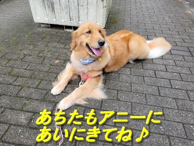 010花音ちゃんブログラスト