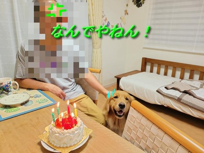 043パパアニーケーキ