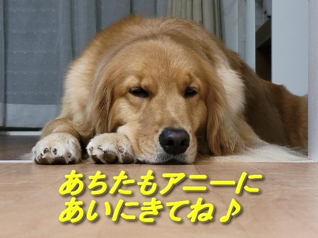 033保護犬カフェラスト アニー