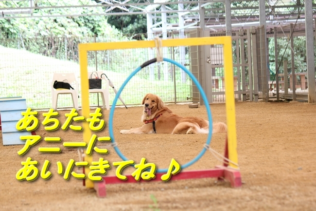 IMG_0307モモちゃんウログラスト
