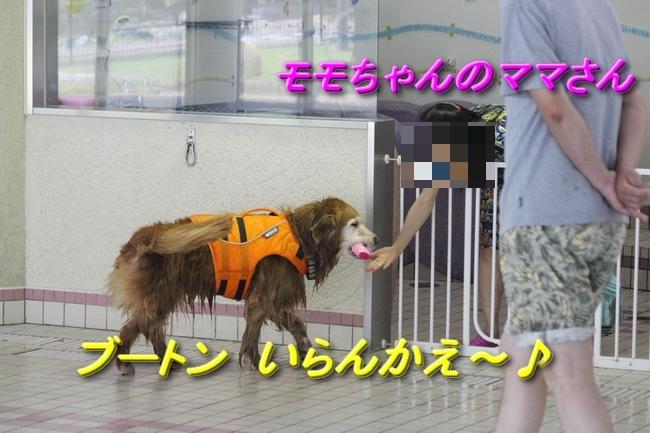 木曜プールモモちゃんフィオナちゃん 045