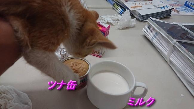 006ミルクとツナ缶
