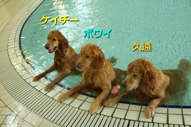 はっち&久遠Boowy Pool 1590923