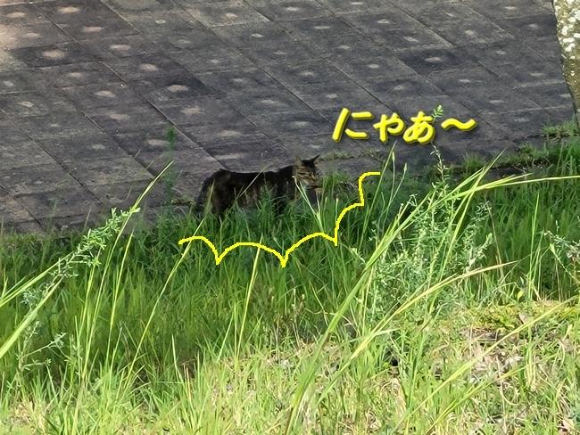 040猫発見