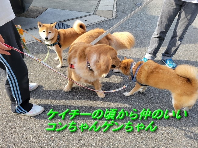 042ゲンちゃんコンちゃん2