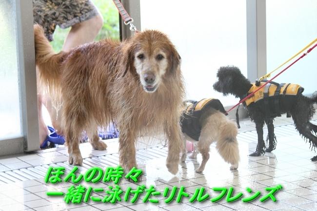 ニコちゃんモコちゃんココネちゃんお水の日 089ケイティ
