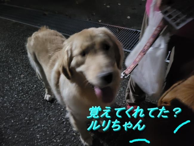 011 るりちゃん笑顔