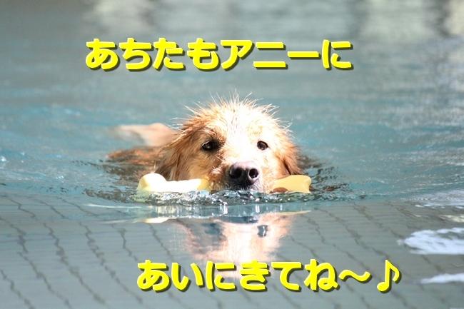 IMG_01360903.jpg
