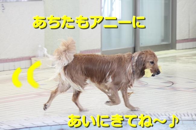IMG_09631017.jpg